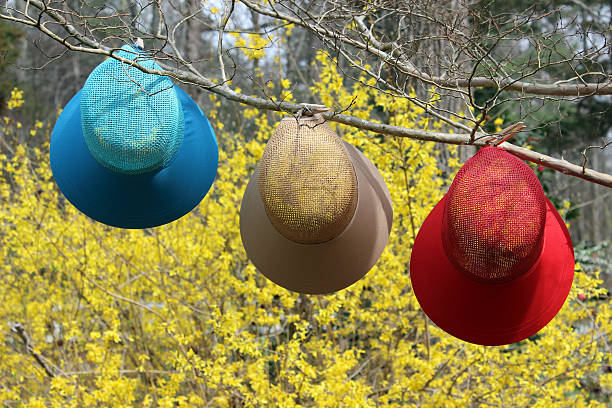 springtime hats on branch with a  stunning yellow forsythia backdrop - pam schodt stock photos and pictures
