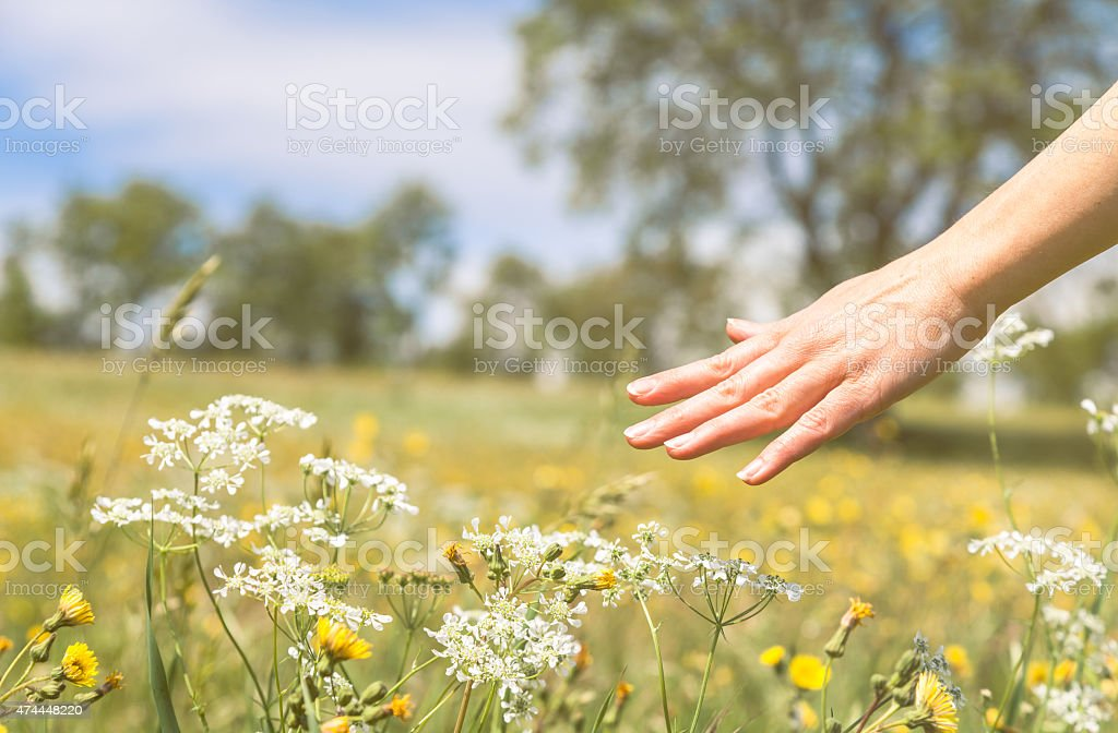 Springtime in a flowery field. Woman touching flowers stock photo