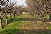 Walk around the park in Aranjuez, Spain