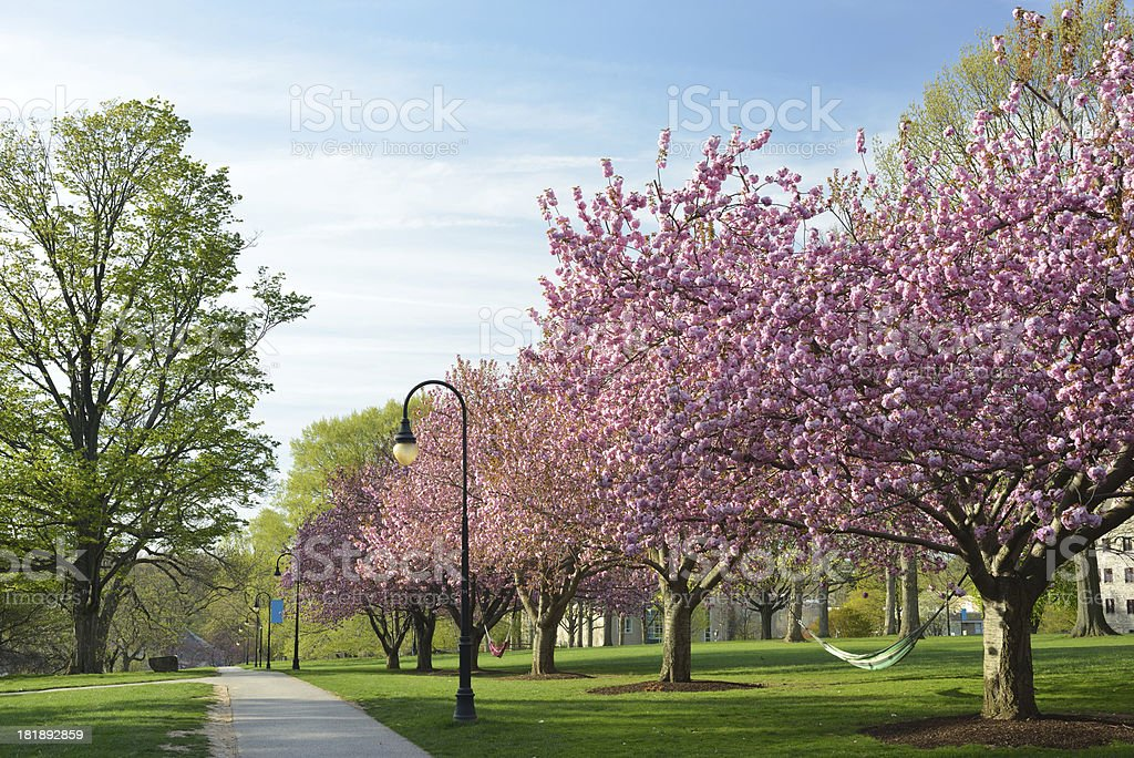 Springtime in Bryn Mawr College stock photo