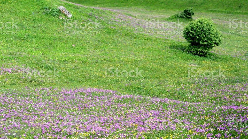Springtime in Caucasus, Swanetia area, Georgia stock photo