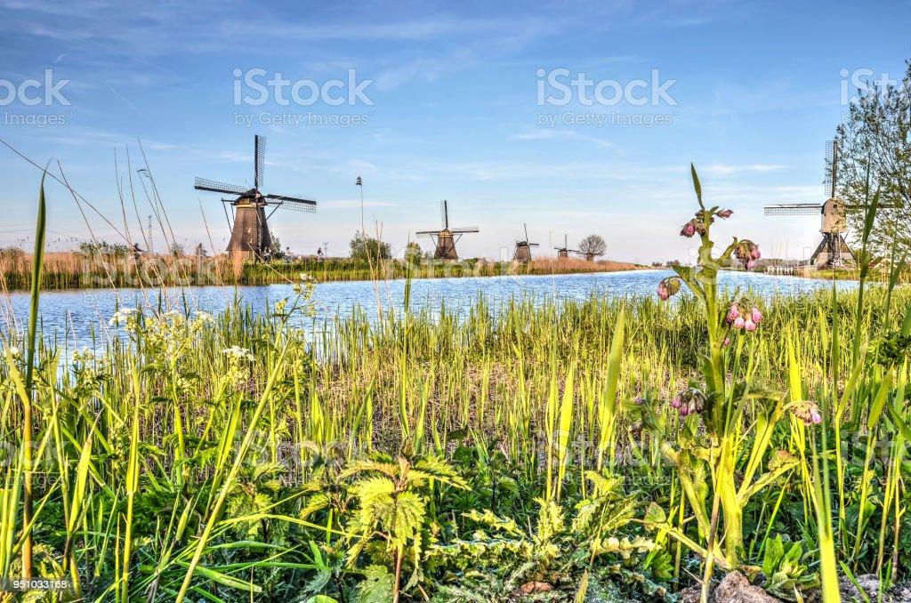 Springtime in Kinderdijk stock photo