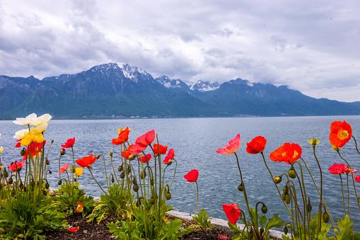 Springtime in Montreux, Switzerland