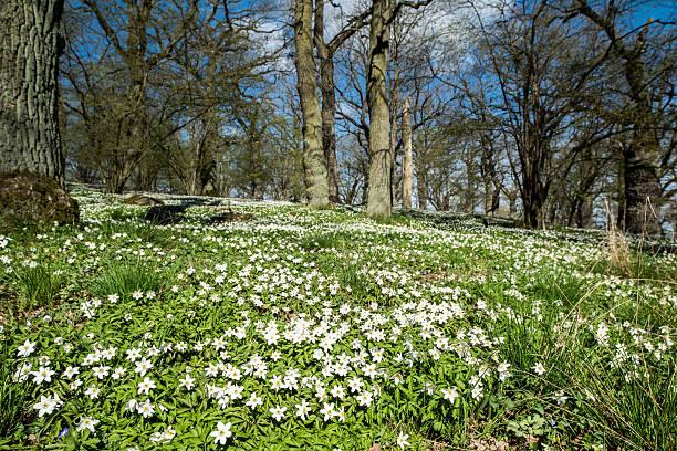 Springtime in Sweden stock photo