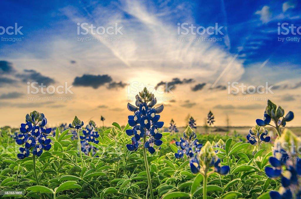 Springtime in Texas stock photo