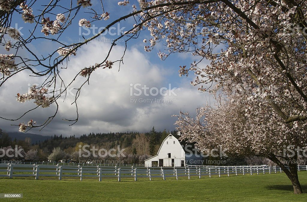 Springtime in the Country stock photo