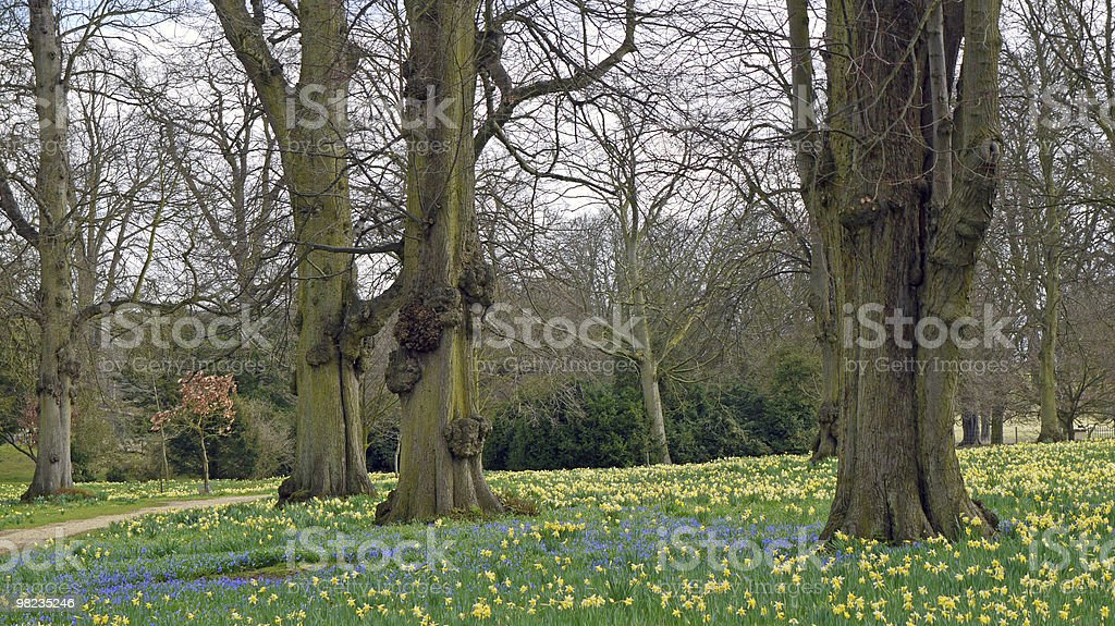 Springtime in the woods. royalty-free stock photo