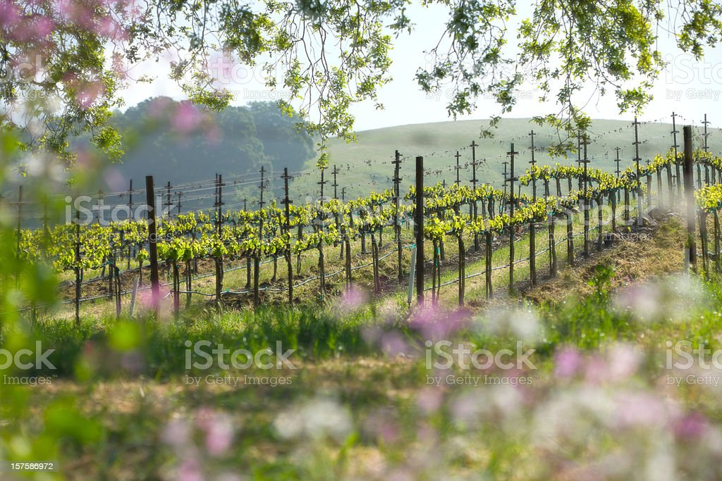 Springtime landscape in Napa Valley, California. royalty-free stock photo