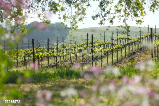Vineyard and spring wild flowers in a Napa Valley scenic. Double exposure process to create soft effect.