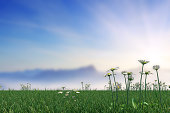Springtime Meadow With Daisies On Sky Abstract Background