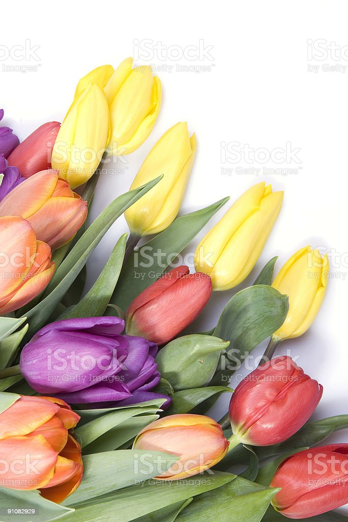Springtime stock photo