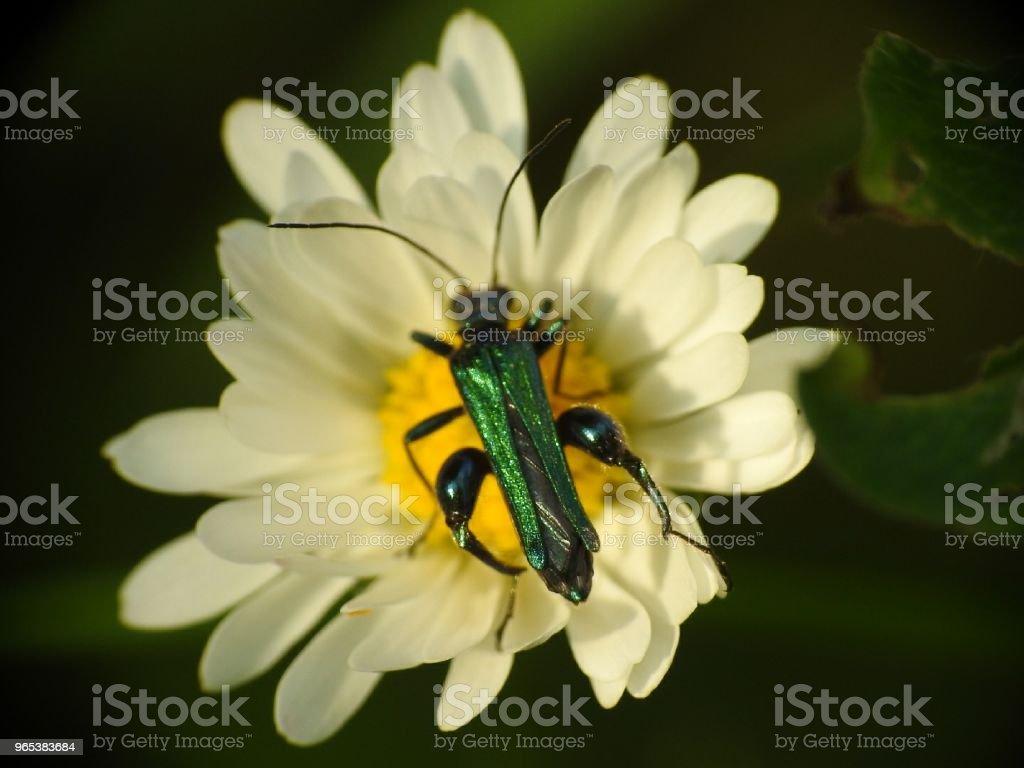 Springtime zbiór zdjęć royalty-free