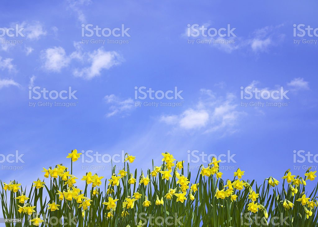 Springtime royalty-free stock photo