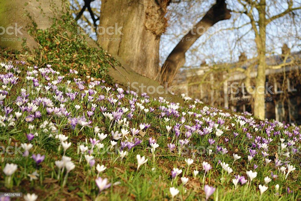 봄 royalty-free 스톡 사진