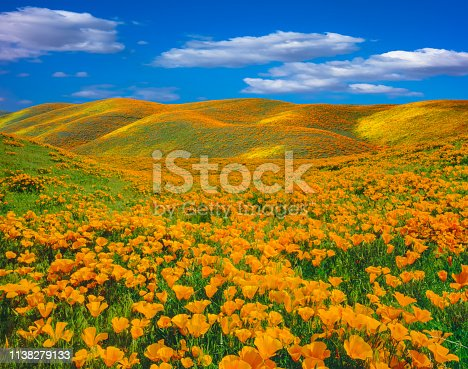 istock Springtime poppy super bloom at Antelope Valley CA 1138279133