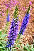 Springtime: Purple Wildflowers