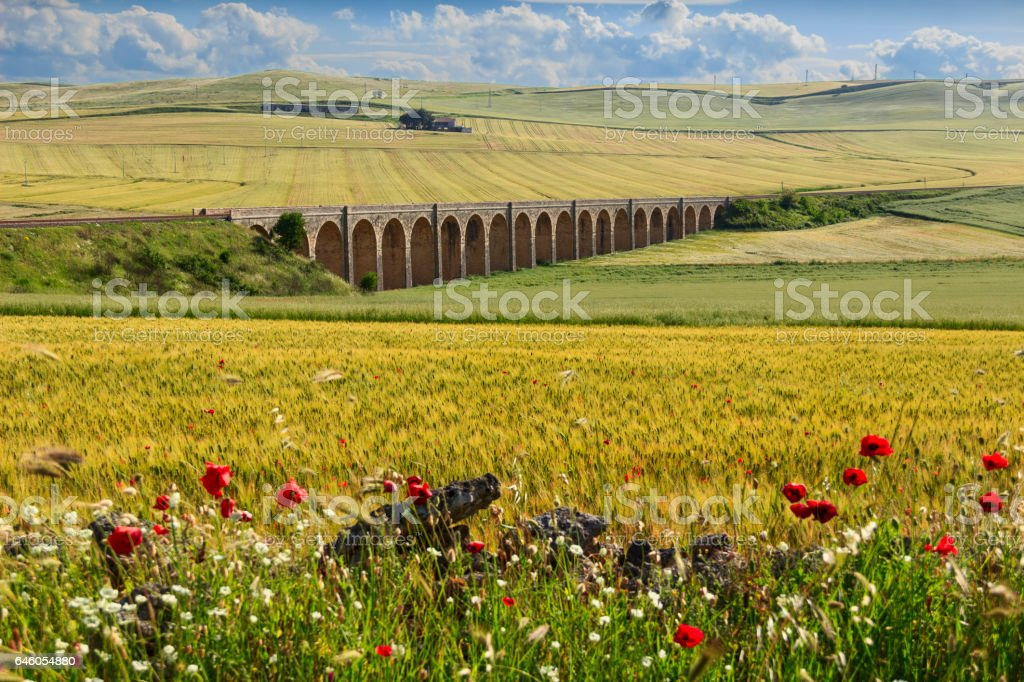 Springtime: railway bridge on the green wheat field.Apulia.ITALY . - foto stock
