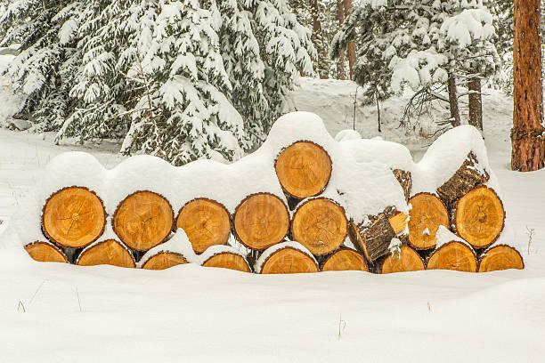 Springtime Snow Storm in the Rocky Mountains stock photo