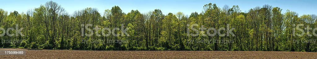 Springtime Treeline Panorama stock photo