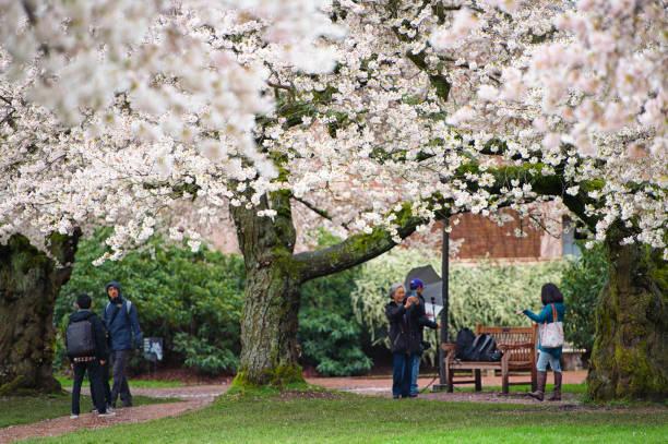 Springtime University of Washington Campus stock photo