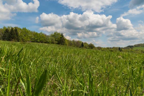 슬로바키아의 봄철 벨카 파트라 산맥과 산의 초원, 숲, 구름이 있는 푸른 하늘 - 벨리카 파트라 뉴스 사진 이미지