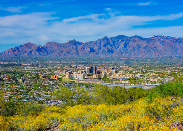 Springtime wildflowers with Tucson skyline. AZ vacation get away; recreational location; travel adventure; desert wonderland pima county stock pictures, royalty-free photos & images