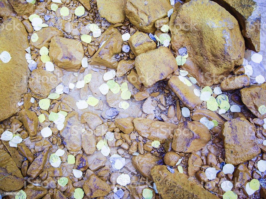 Sprinkle of Aspen leaves royalty-free stock photo