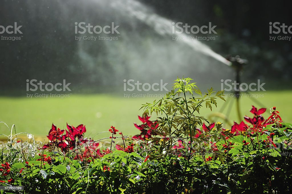 Sprinkler at work, flowers close up royalty-free stock photo