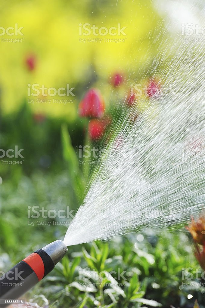 Sprinkler at work, flowers in backgrund royalty-free stock photo