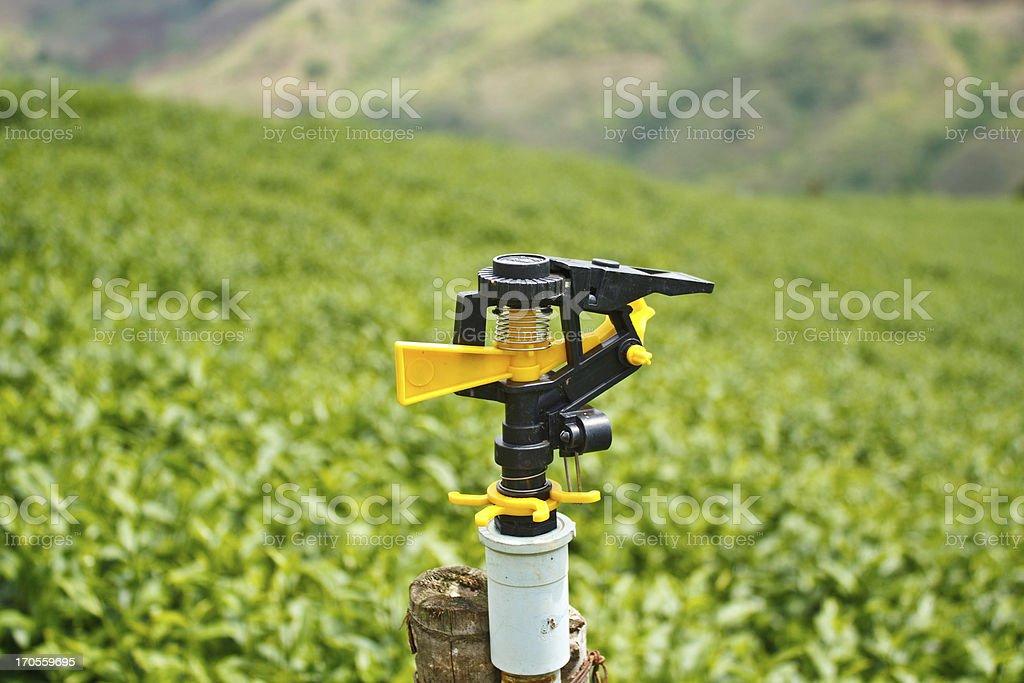 Sprinkler in tea plantation royalty-free stock photo