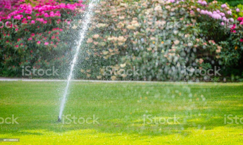 Sprinkler watering large lawn