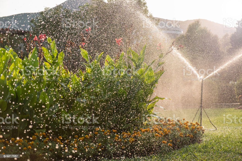 Sprinkler system watering the lawn stock photo