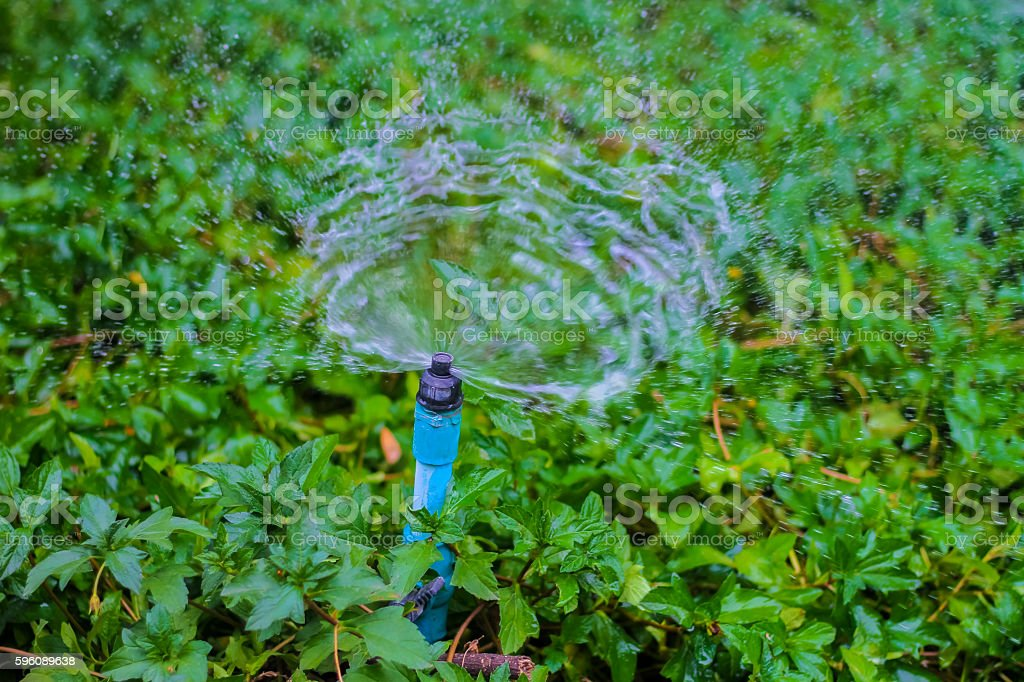 Sprinkler water working in the garden. royalty-free stock photo