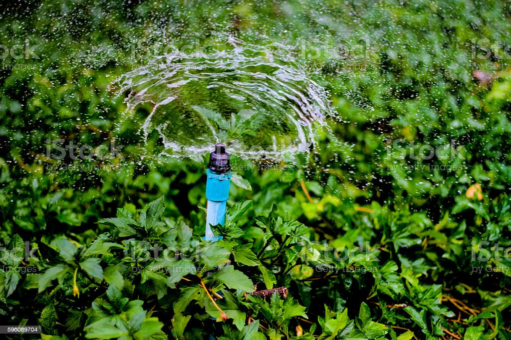 Sprinkler water working in the garden. royalty-free stock photo