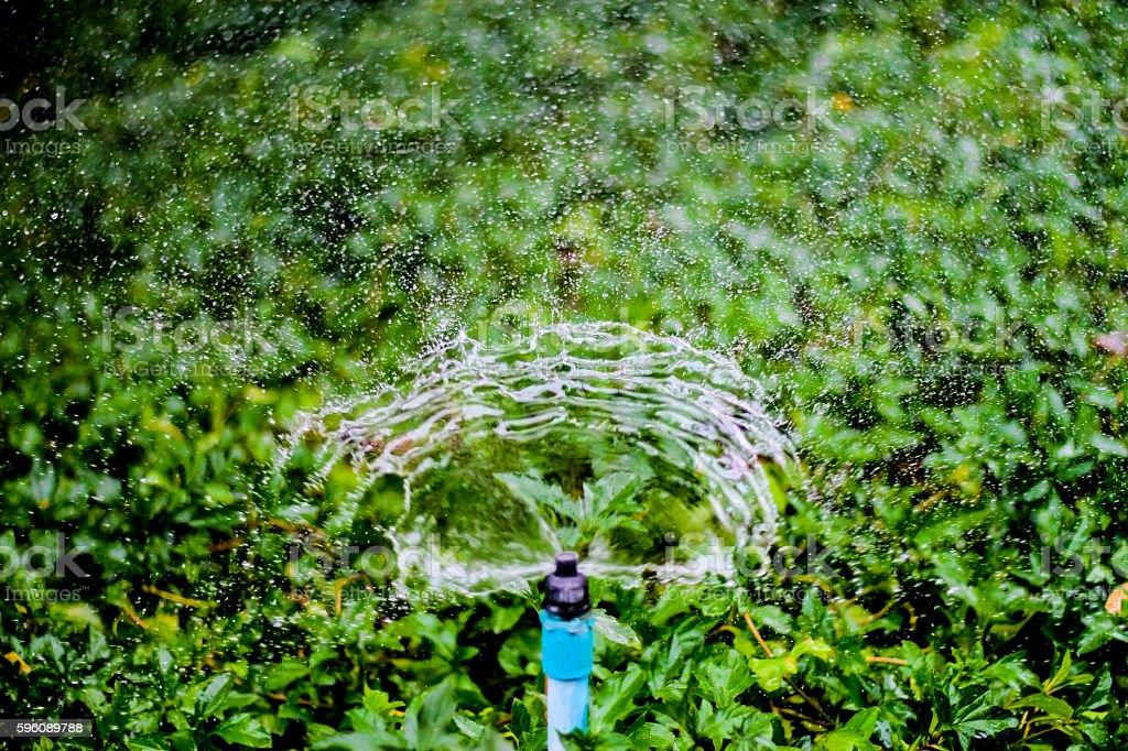 Sprinkler water working in the garden. stock photo