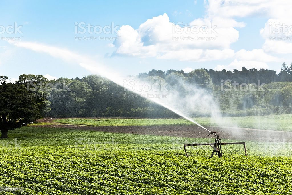 Sprinkler watering crops on a farm stock photo