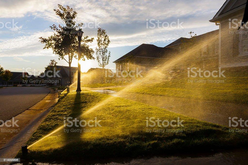Extincteurs automatiques à eau herbe et de coucher du soleil. - Photo