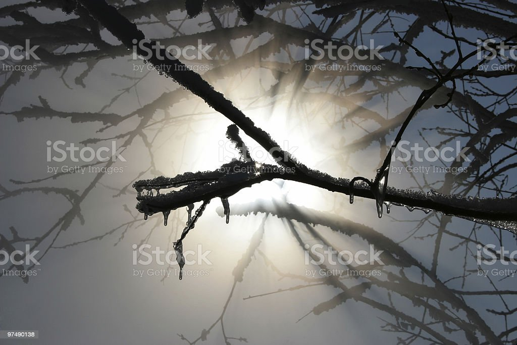 Sprint forest royalty-free stock photo