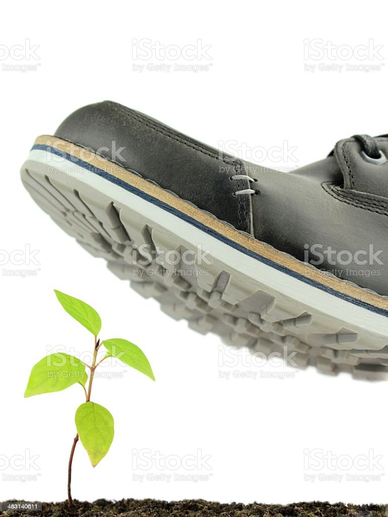 Sprout and careless step. The nature protection concept stock photo