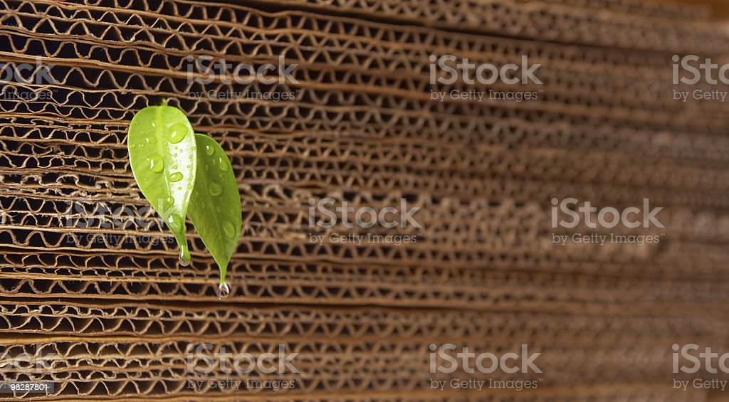 Sprout from a cardboard pile royalty-free stock photo