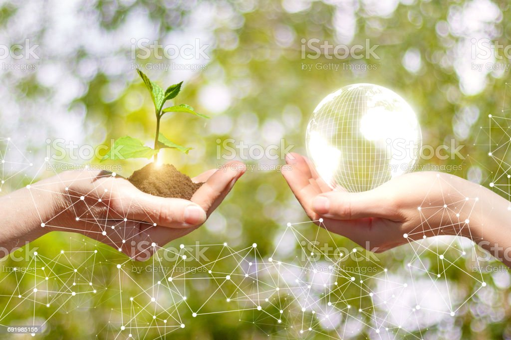 Sprout growing and Globe in a hands stock photo