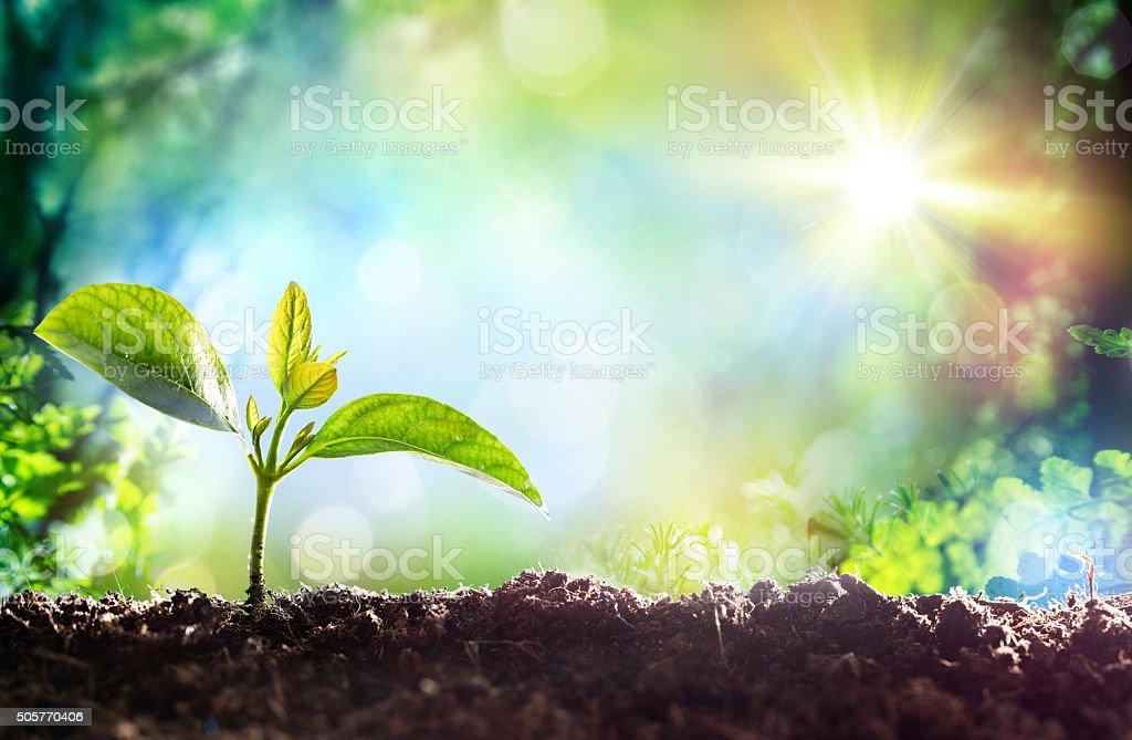 Sprout wachsenden-Beginn einer neuen Leben – Foto