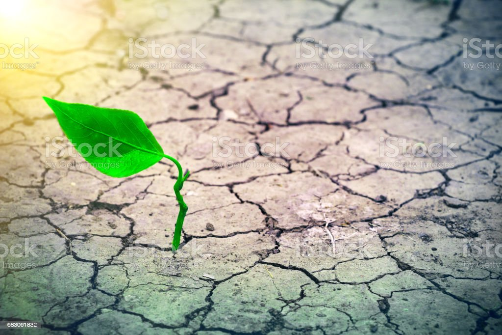 Sprout Growing in Drought Environment stock photo