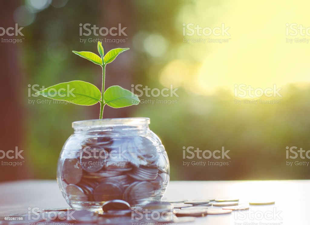 Sprout growing on money pile of glass jar bank stock photo