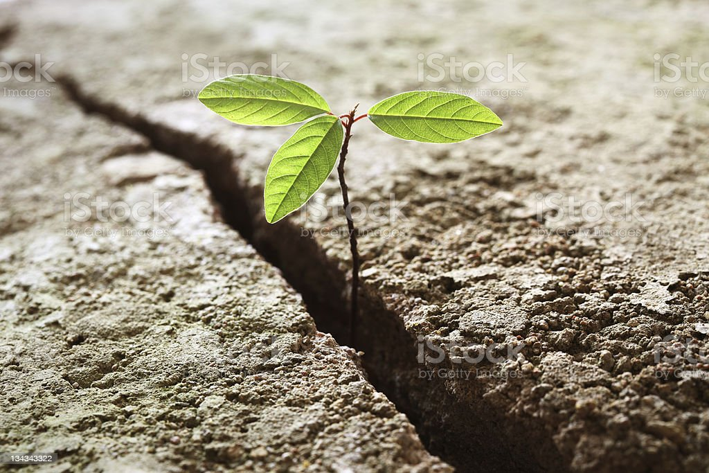 Sprout growing out of concrete royalty-free stock photo