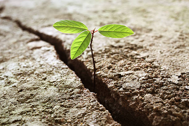 sprout growing out of concrete - endurance stock pictures, royalty-free photos & images