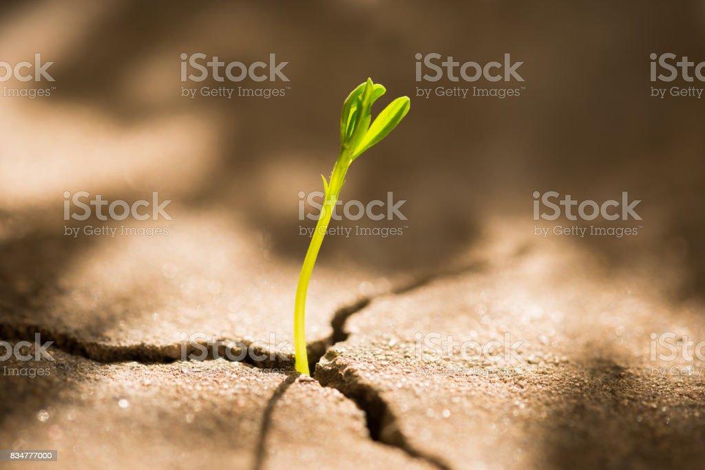 Sprout wachsen aus Beton – Foto
