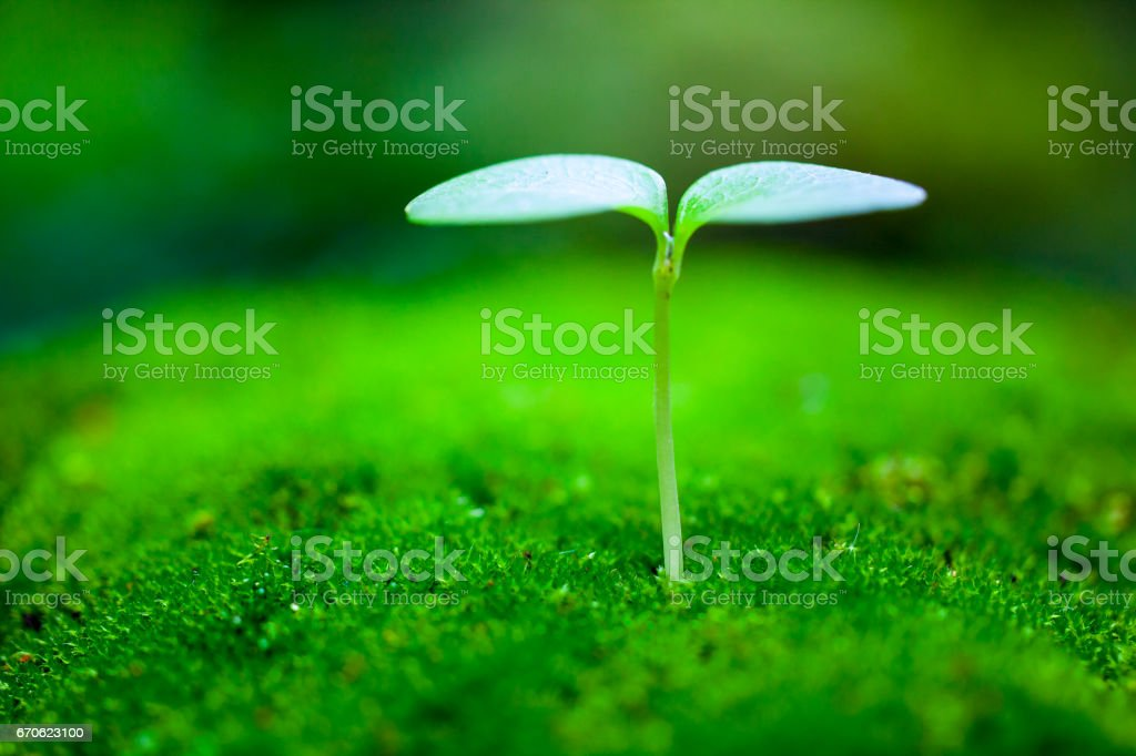 Sprout growing - foto stock