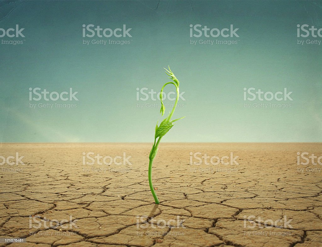 sprout in desert stock photo