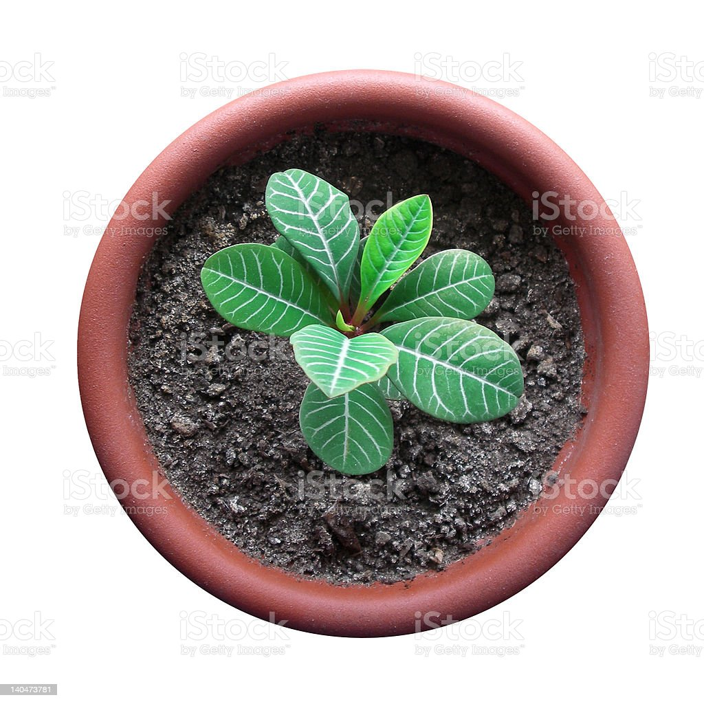 sprout in flowerpot royalty-free stock photo